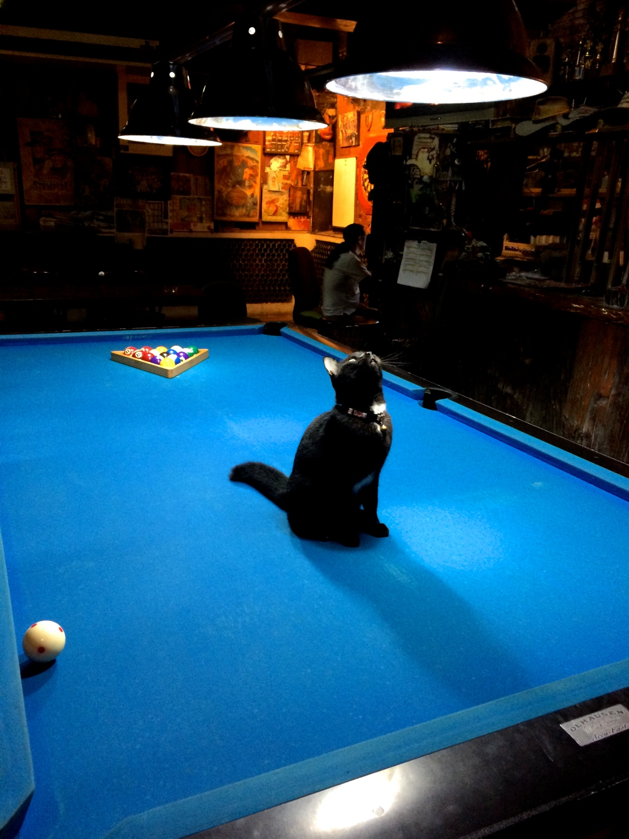 That's a cat on a pool table!
