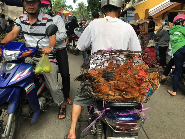 Completely unrelated photo of a guy transporting chickens in Hoi An.
